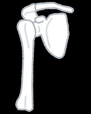 肩関節.png